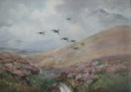 Grouse in Flight - Scotland